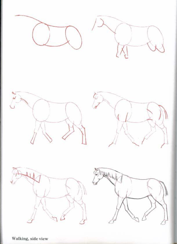 4 способа:? как нарисовать лошадь карандашом поэтапно для начинающих