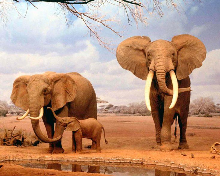 Слон – символ и тотем