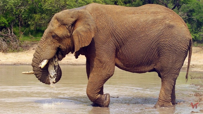 А. и. куприн. слон. текст произведения
