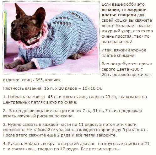 """. онлайн по """"шапке кошке""""."""