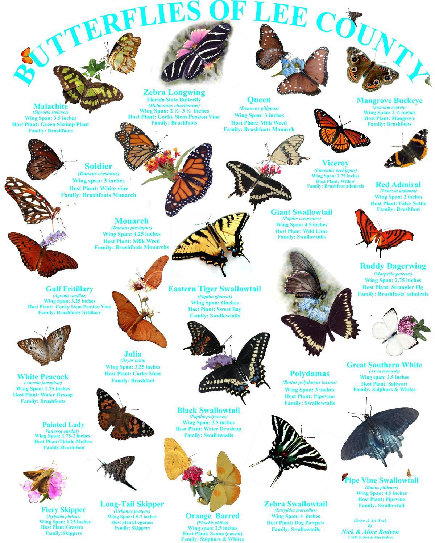 Маджонг бабочки 2 — играть онлайн бесплатно