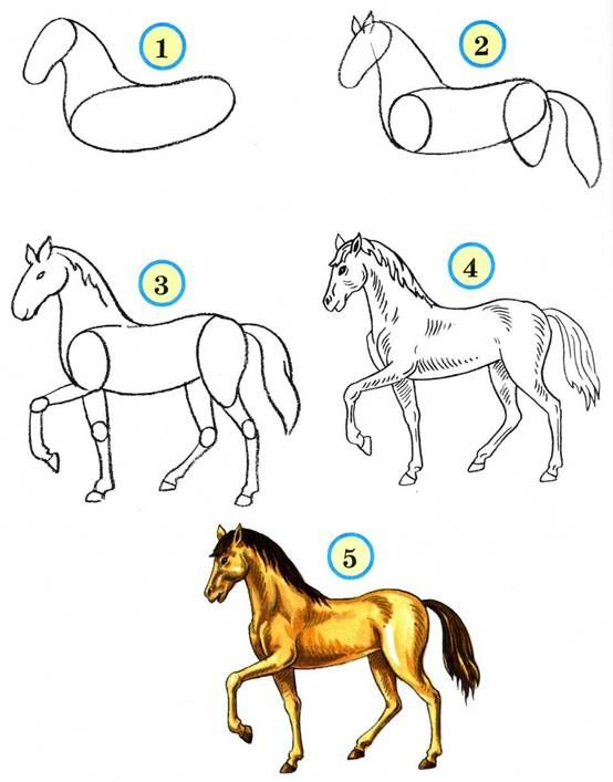 Как рисовать животных: лошади, их анатомия и позы - cg magazine