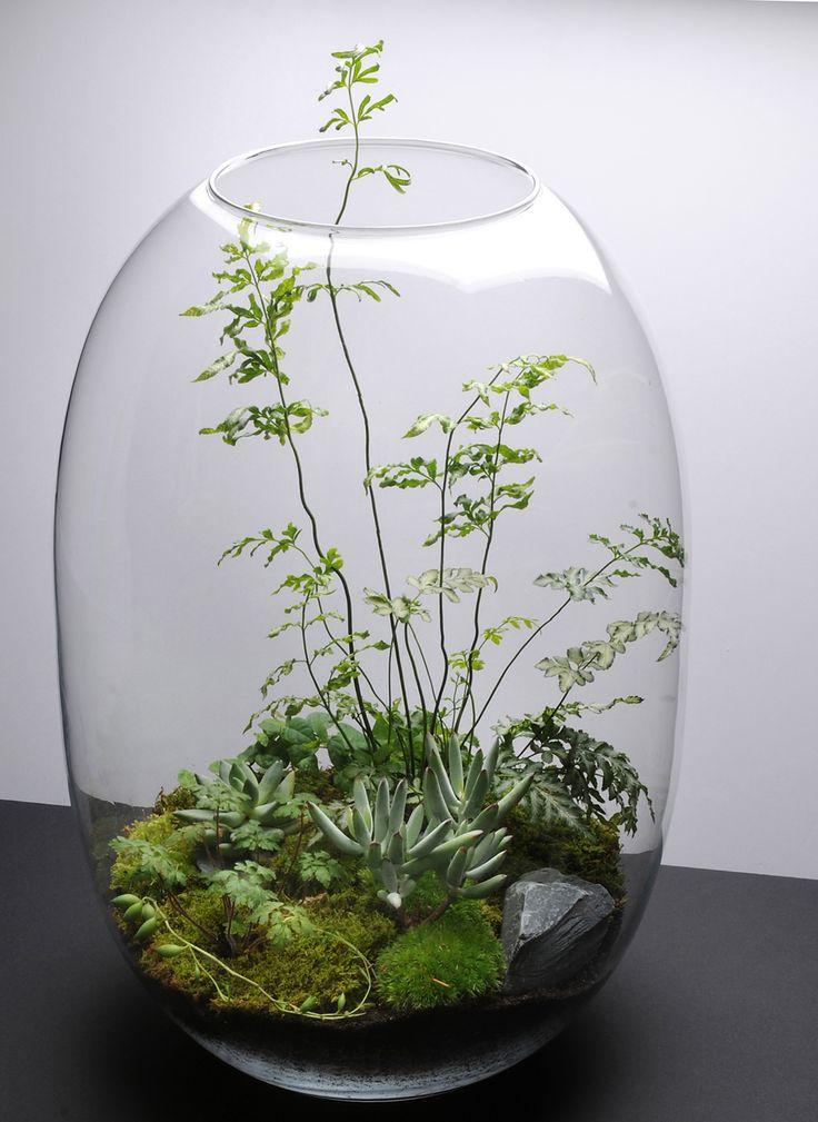 Как сделать флорариум своими руками: самые эффектные идеи для вашего дома