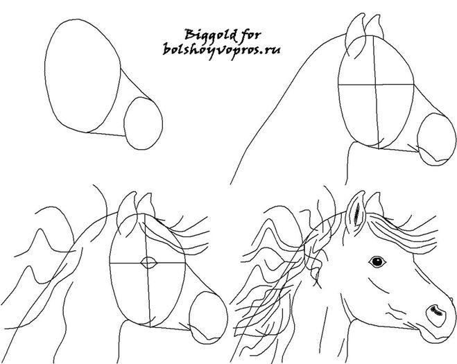 Как нарисовать лошадь карандашом поэтапно для начинающих