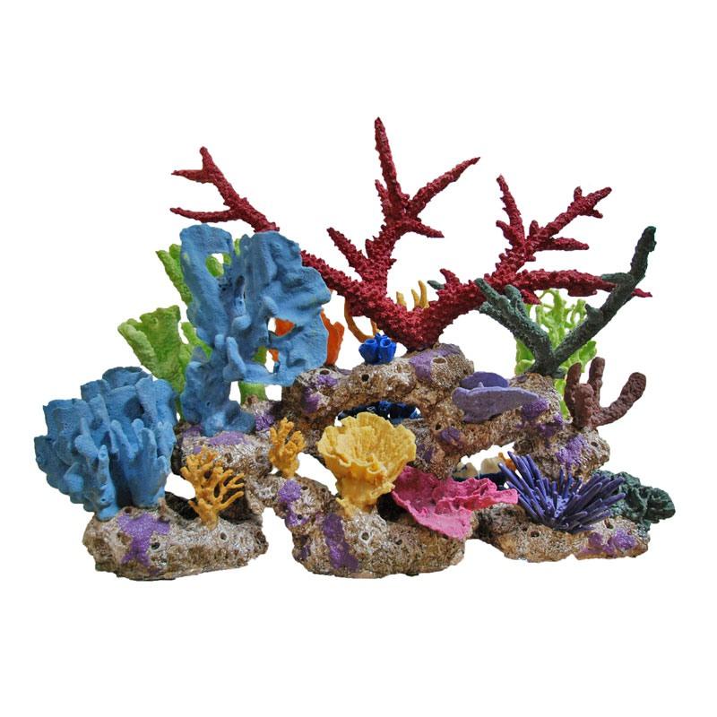 Кораллы и коралловые рифы – описание, как добраться, фотографии и море интересной информации | nicko.ru