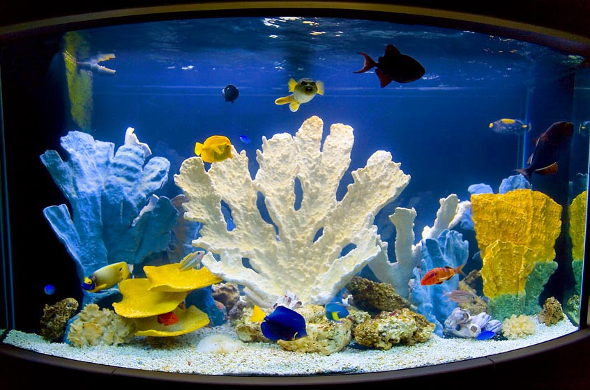 Коралловый блок