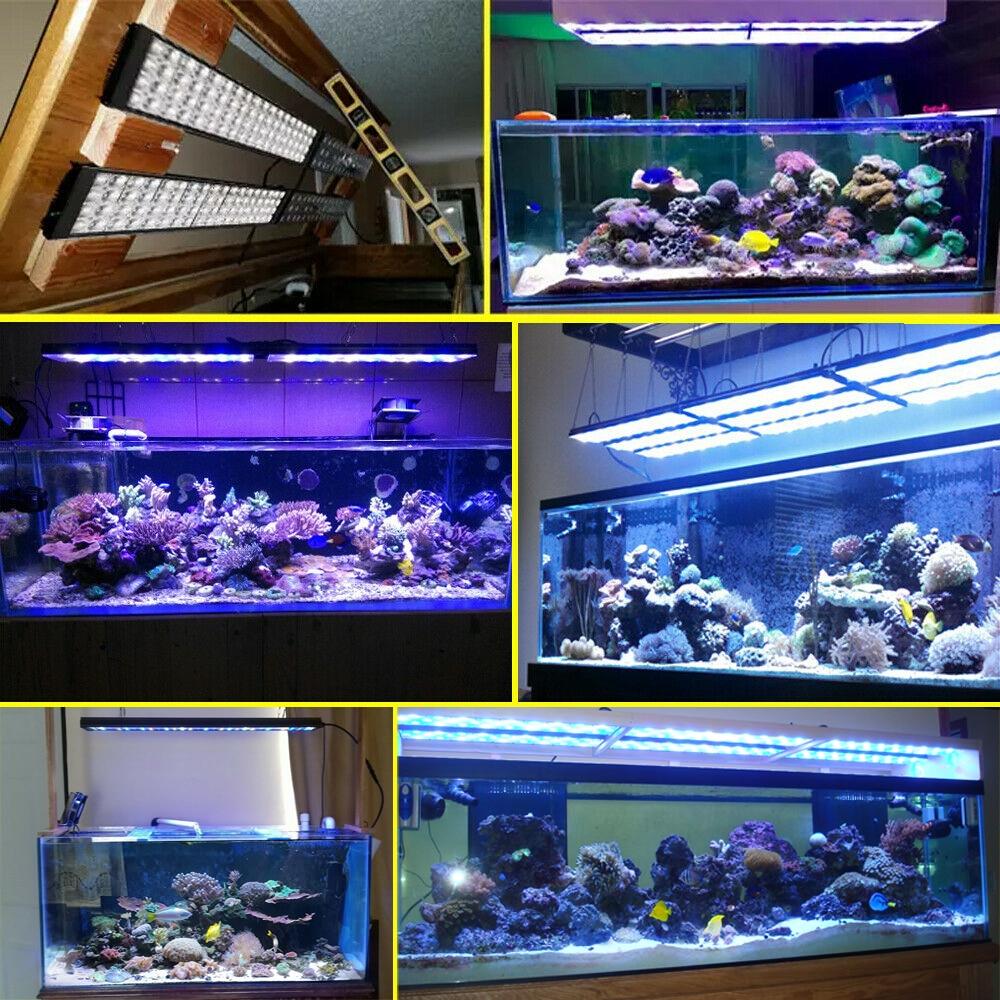 Выбор лампы для аквариума: что нужно знать, какие подходят