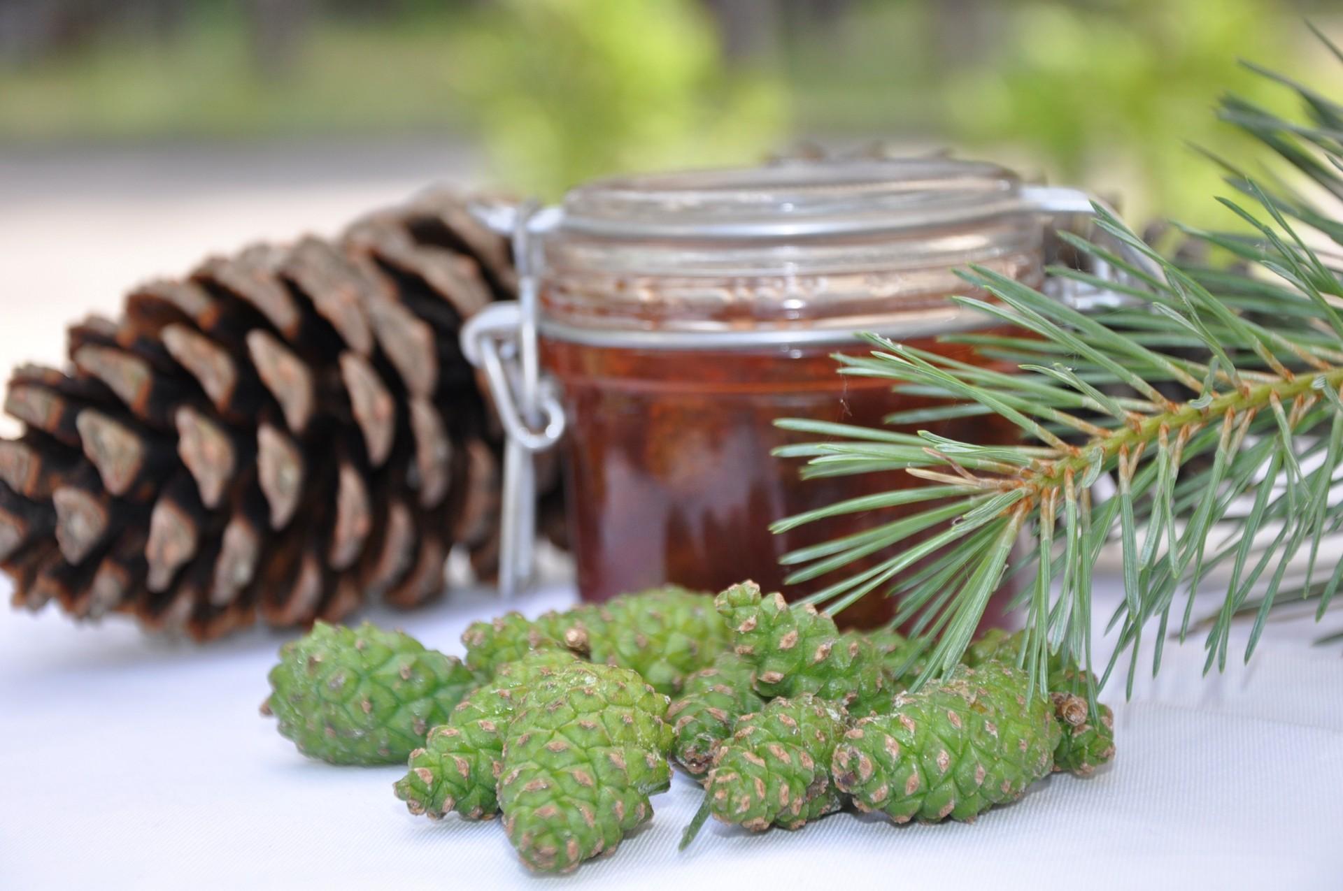 Настойка из сосновых шишек на водке для сосудов и других болезней