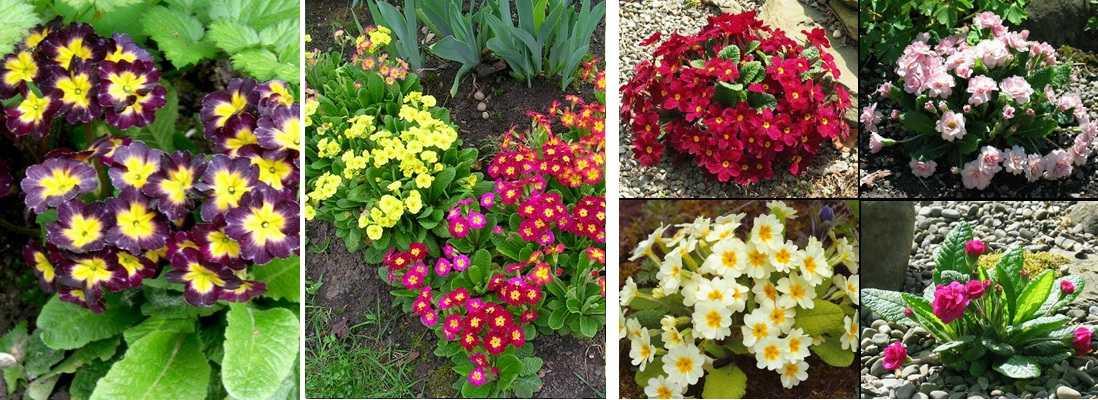 Названия цветов с фотографиями   комнатные и садовые