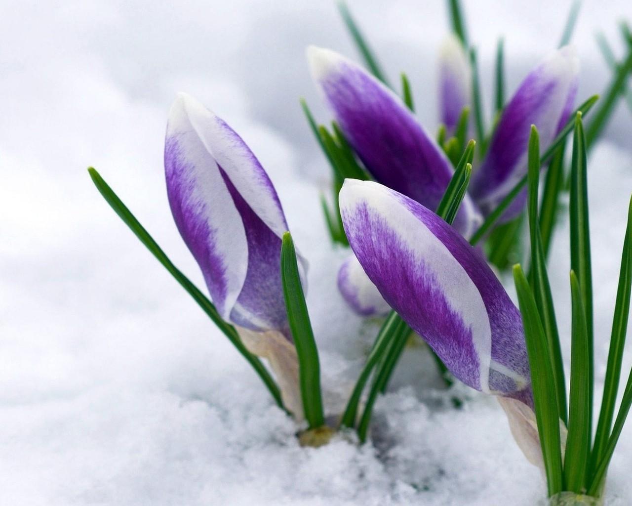 Первый день весны стихи - сборник красивых стихов в доме солнца