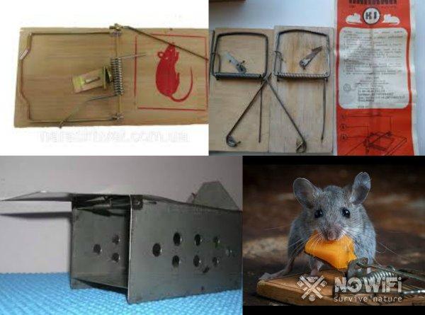 Мышеловка ловушка. как устанавливать мышеловку: инструкция и советы