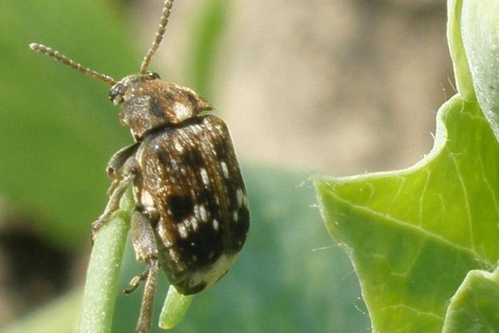 Как избавиться от долгоносиков в зерне? методы борьбы с жуком