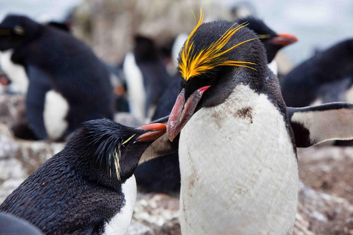 Пингвины – виды с фото и названиями, описание, внешний вид, породы | разновидности пингвинов
