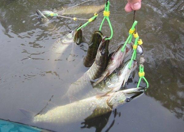 Кукан для рыбы: что это такое и для чего нужен, универсальные виды куканов и где купить недорого