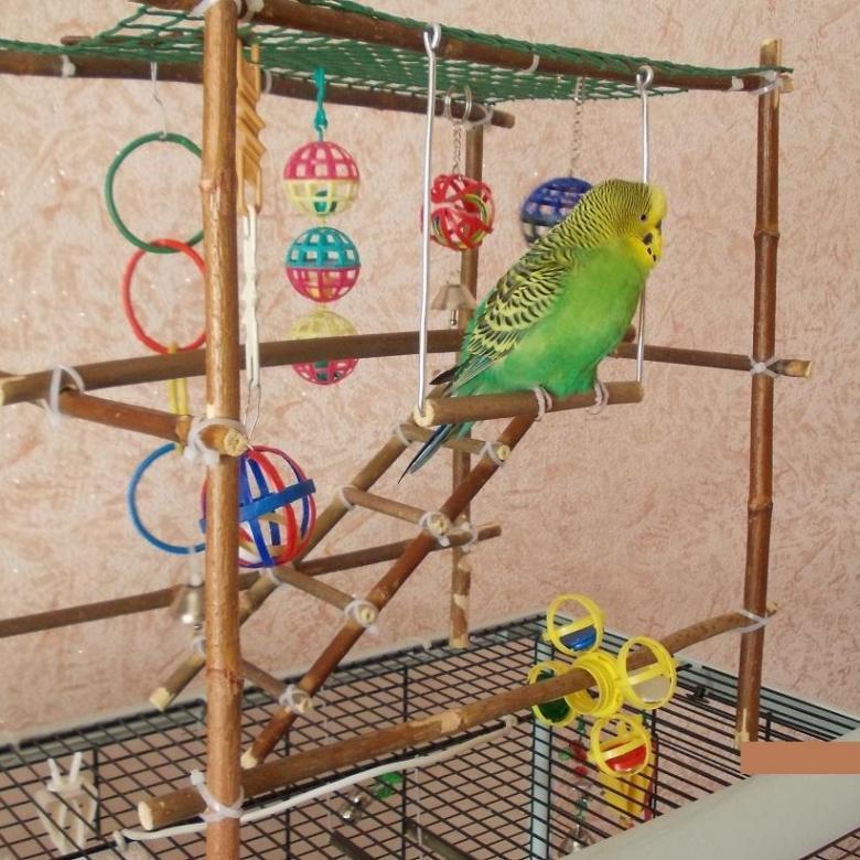 Игрушки для попугаев - зачем они нужны? какие бывают?