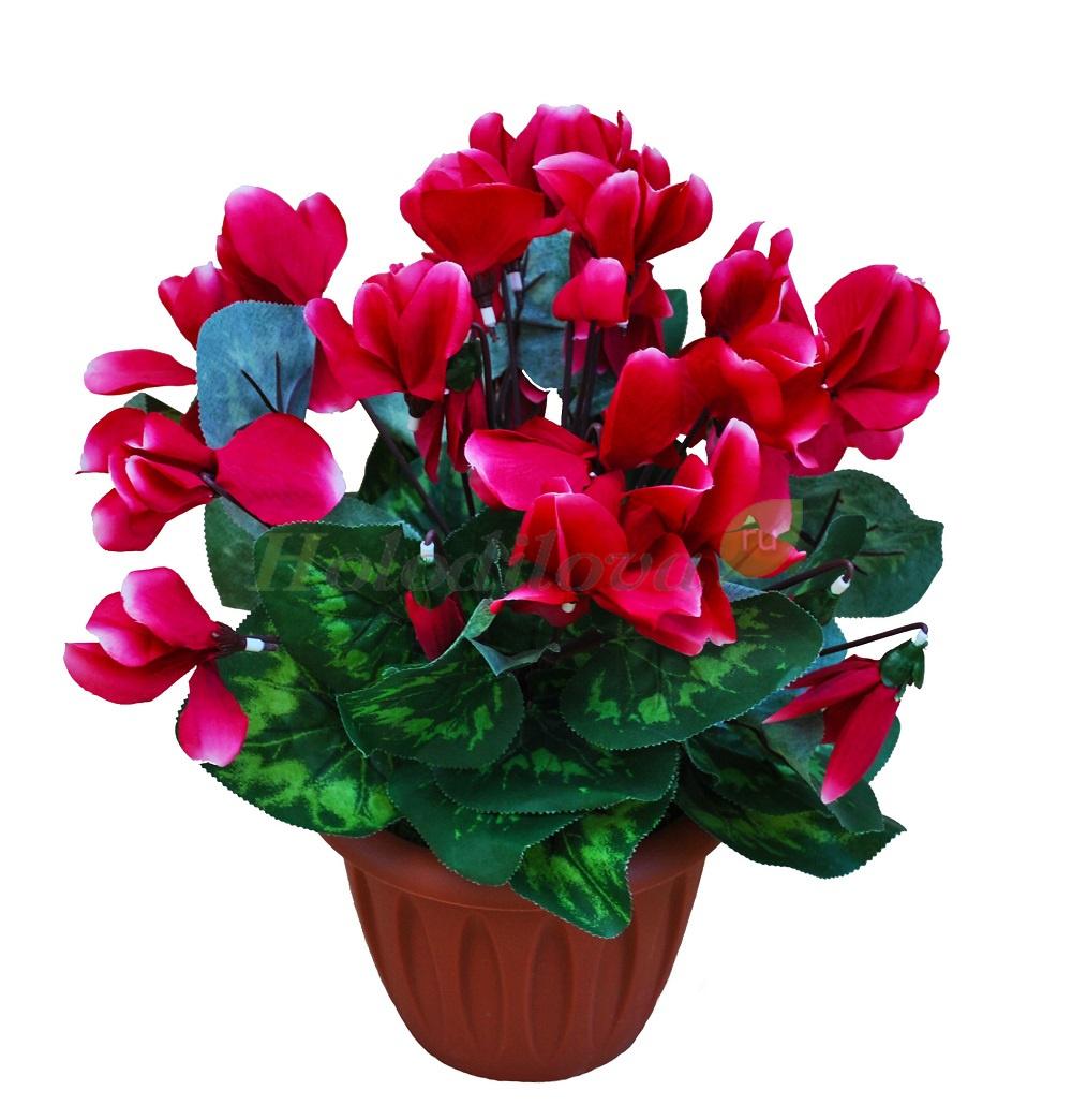 Комнатные растения с самыми изящными цветками. список названий растений с красивыми цветками. фото — ботаничка.ru