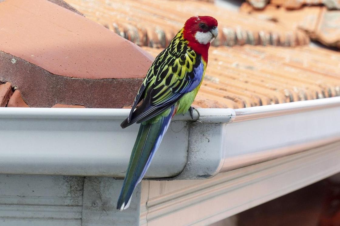 10 видов попугаев, которых легко научить говорить | полезно (огород.ru)