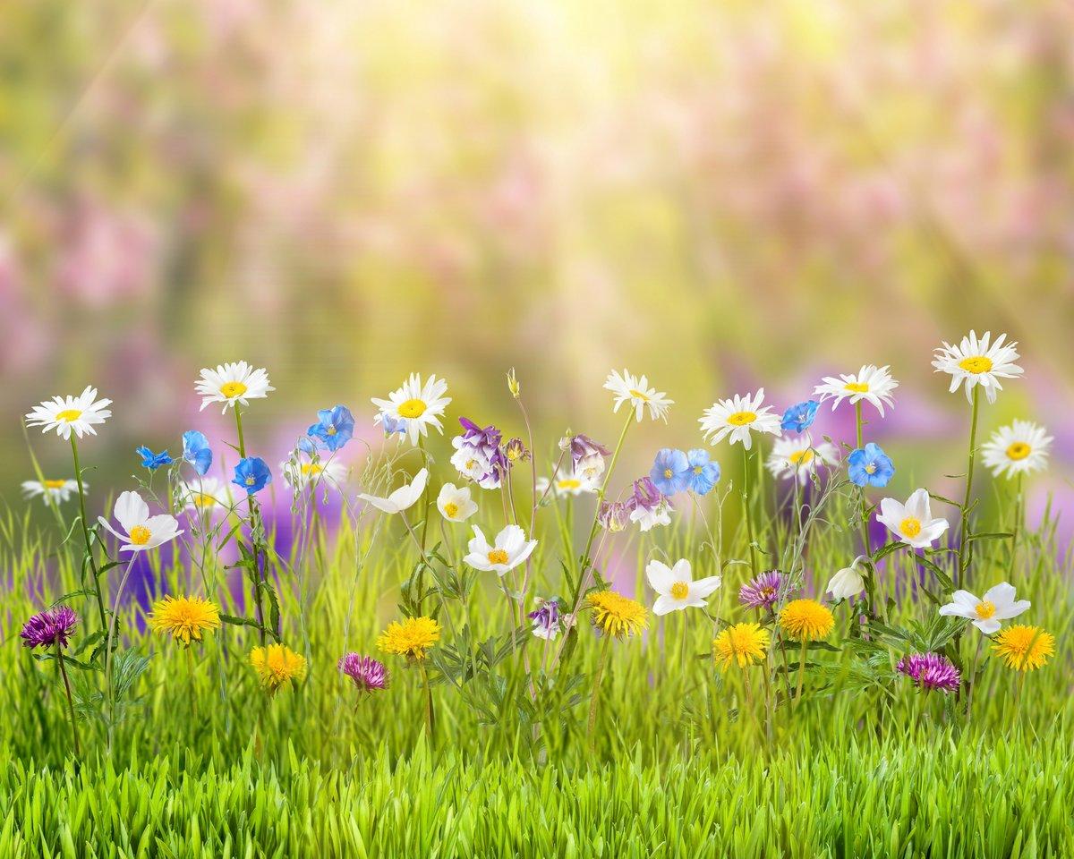 """Поздравительная открытка """"цветочная полянка"""""""
