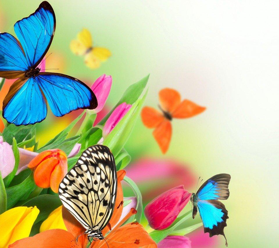 Открытка «Бабочка на цветке»