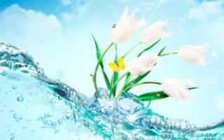 Поздравления на первый день весны— красивые и прикольные стихи