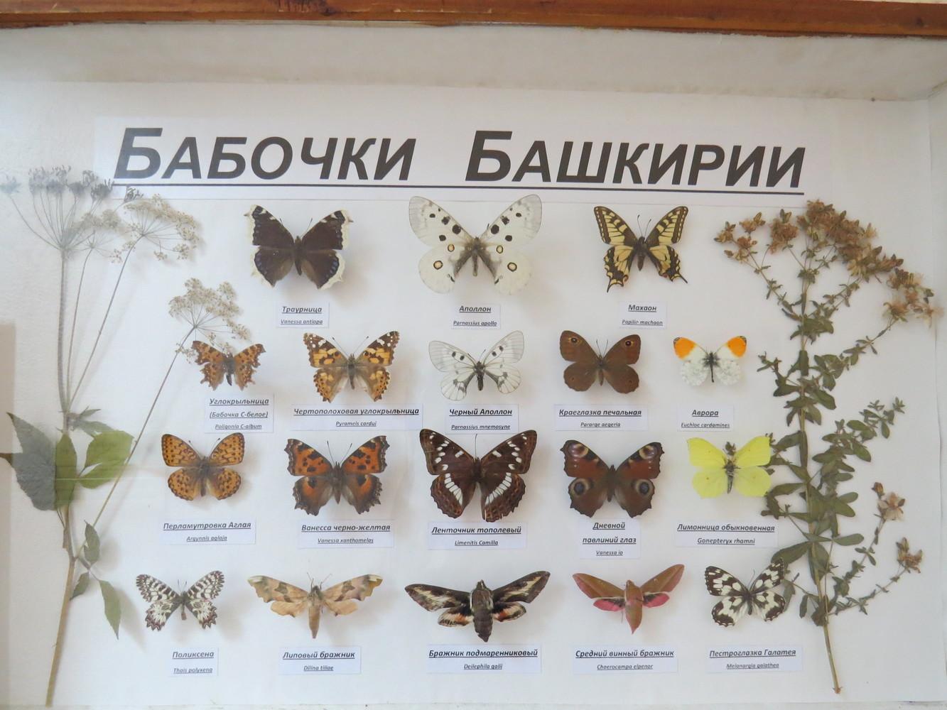 Бабочка - 165 фото разнообразных и самых удивительных бабочек