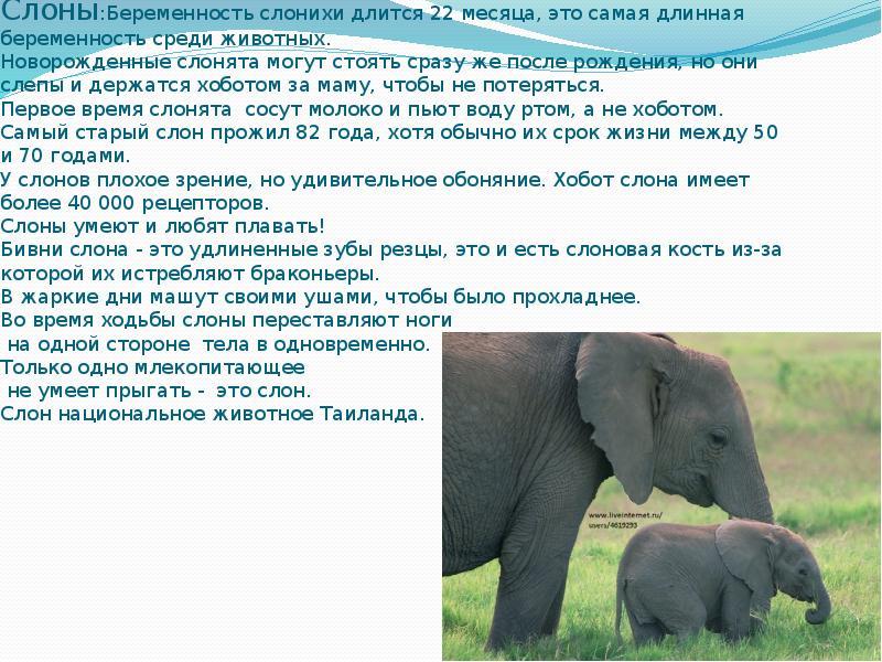Талисман слон: что означает оберег, где разместить и как активировать