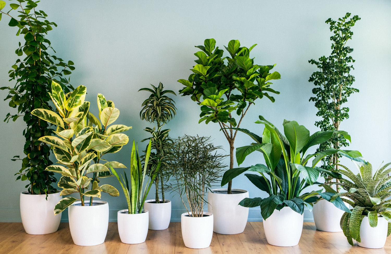 Комнатные растения с самыми изящными цветками