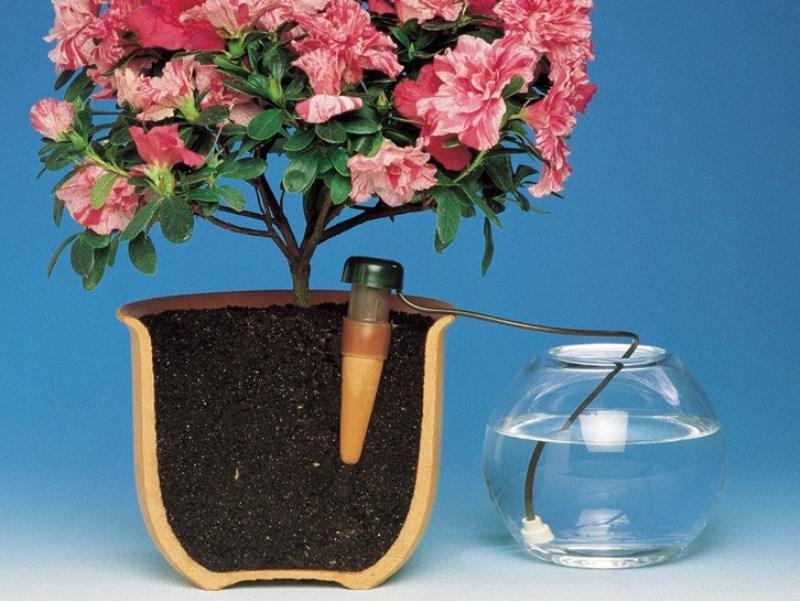 Самые популярные системы автополива для комнатных растений