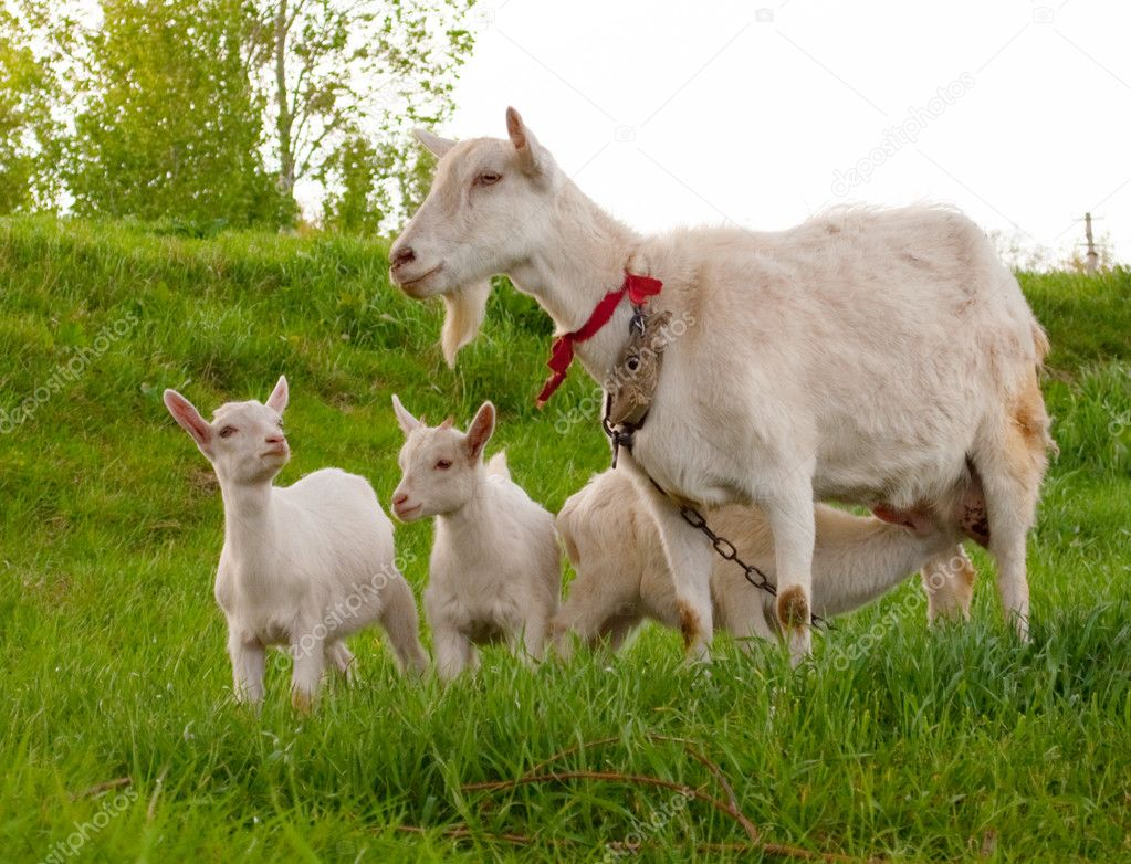 Сценарий праздника 8 марта «волк семеро козлят» на новый лад» в средней группе