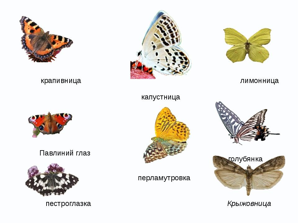 Маджонг «бабочки» - красочная многоуровневая головоломка