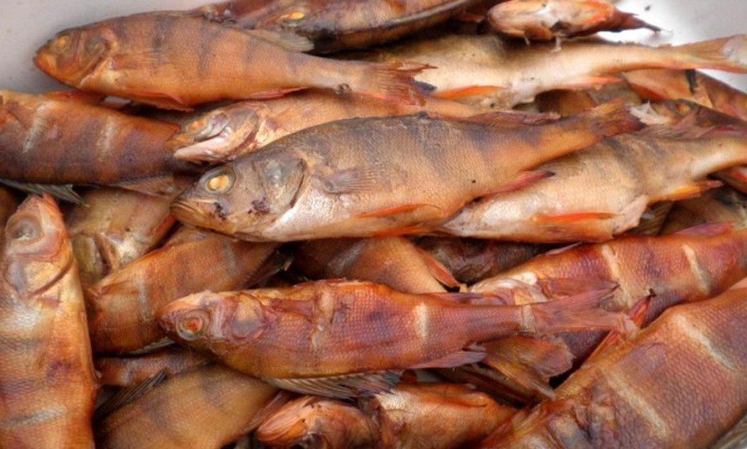 Нюансы копчения окуня. кулинарные секреты рыбаков