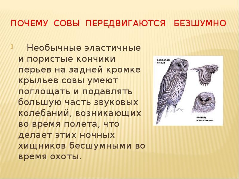 Птица сова