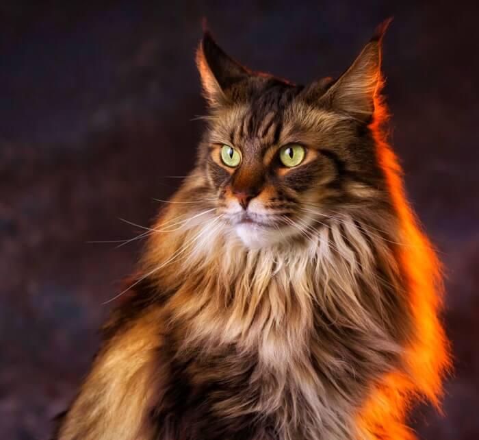 ✅ веселые стильные коты - eco-podarki.ru