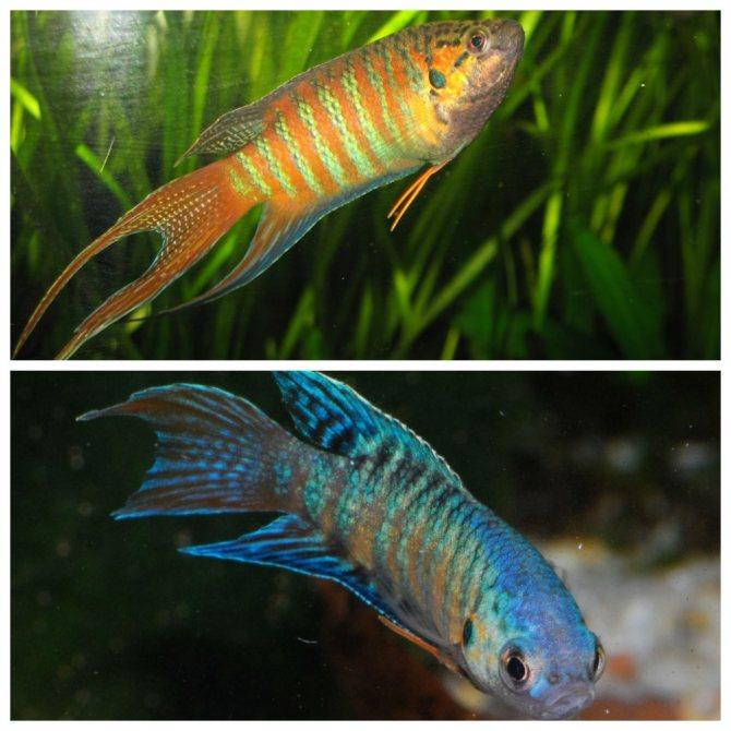 Какие аквариумные рыбки самые неприхотливые в уходе