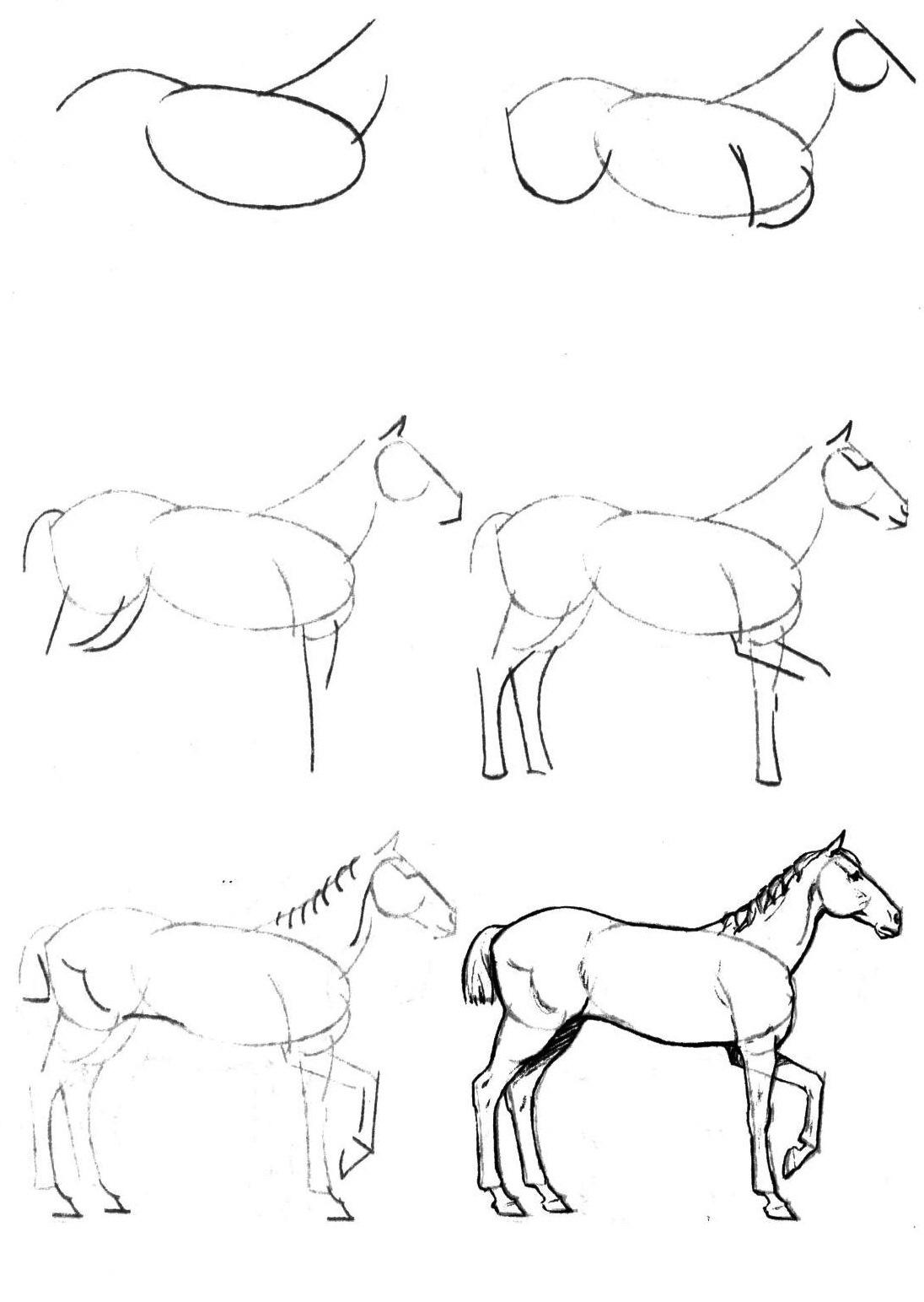 Как нарисовать лошадь карандашом поэтапно для начинающих, рисунок лошади