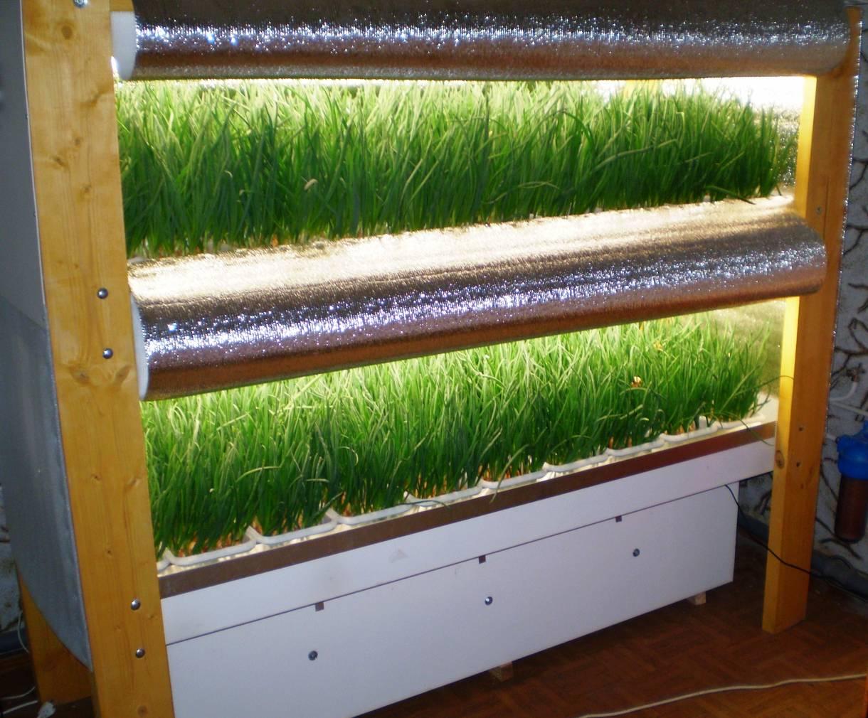 Как выращивать лук на перо в теплице зимой и зарабатывать на этом — подробный бизнес-план