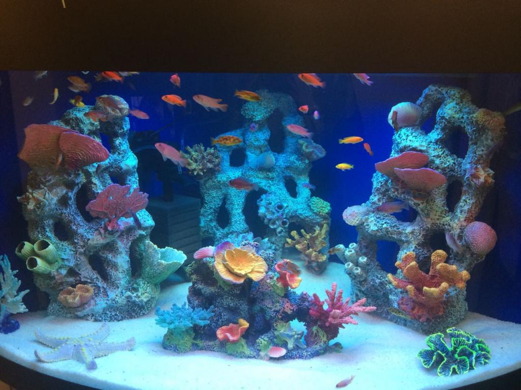 Коралловая вода - мифы и факты. видео.