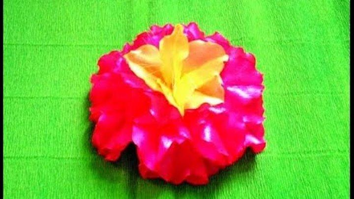 Гавайский лотос