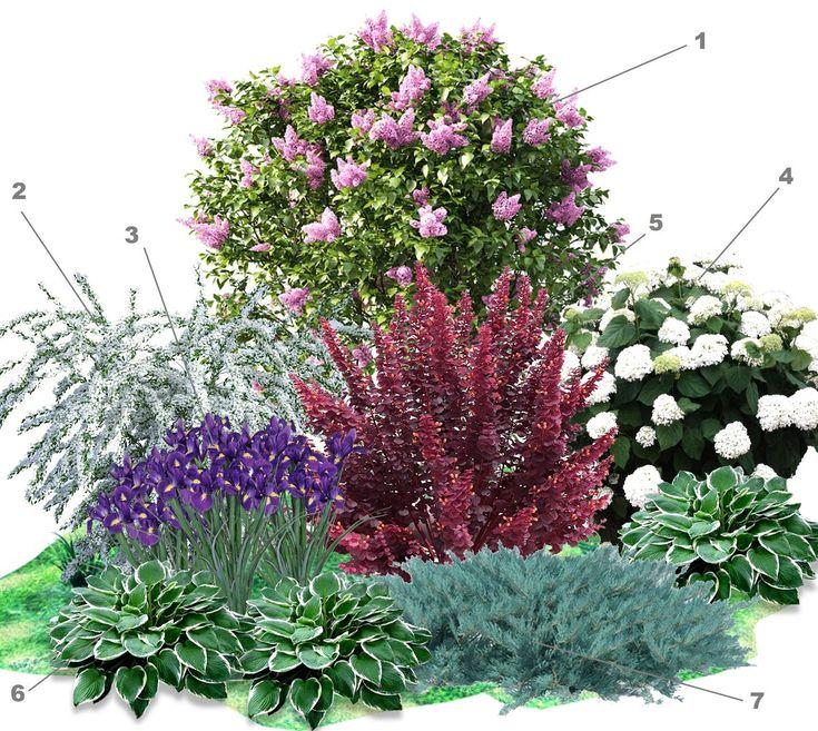 Цветы однолетки неприхотливые и красивые, которые цветут все лето  - 34 фото