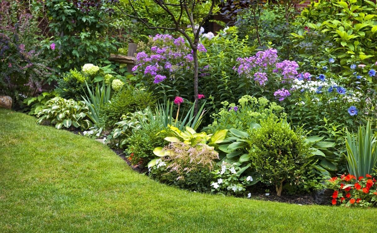 20 растений с большими цветками – яркие акценты для вашего сада | дизайн участка (огород.ru)