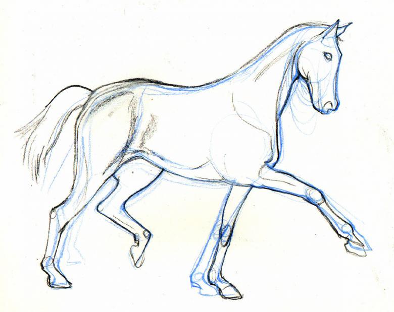 Как поэтапно нарисовать лошадь