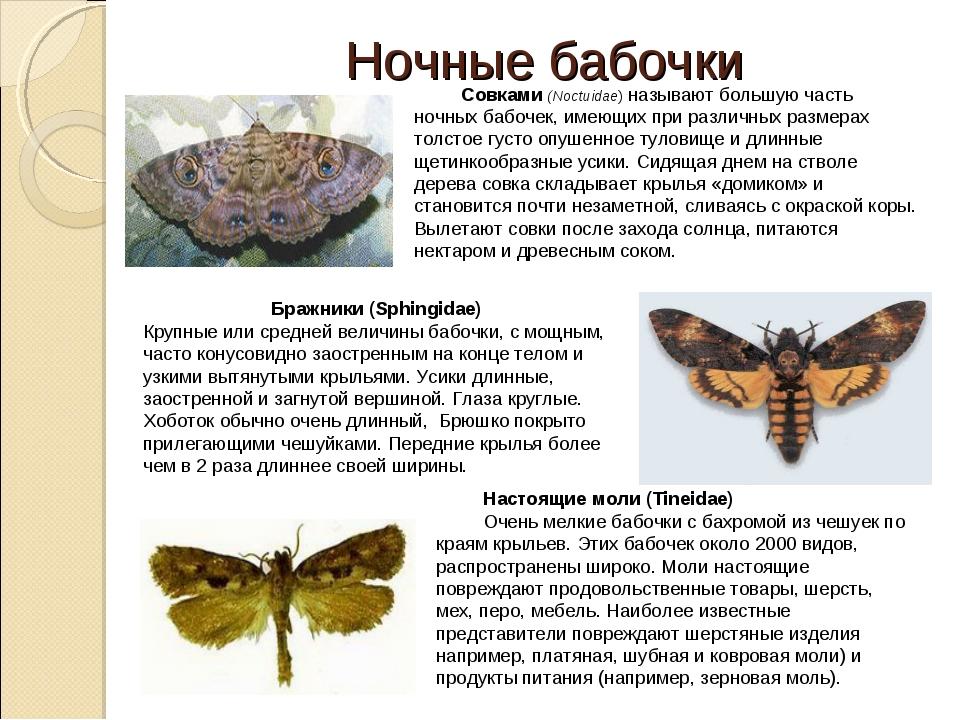 Чешуекрылые представители насекомых, чешуйчатокрылые бабочки
