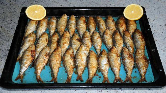 Виды тарелок для рыбы и их применение для сервировки стола