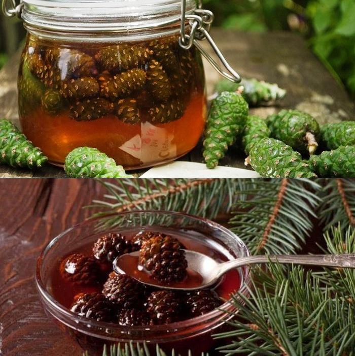 Варенье из сосновых шишек: рецепты приготовления