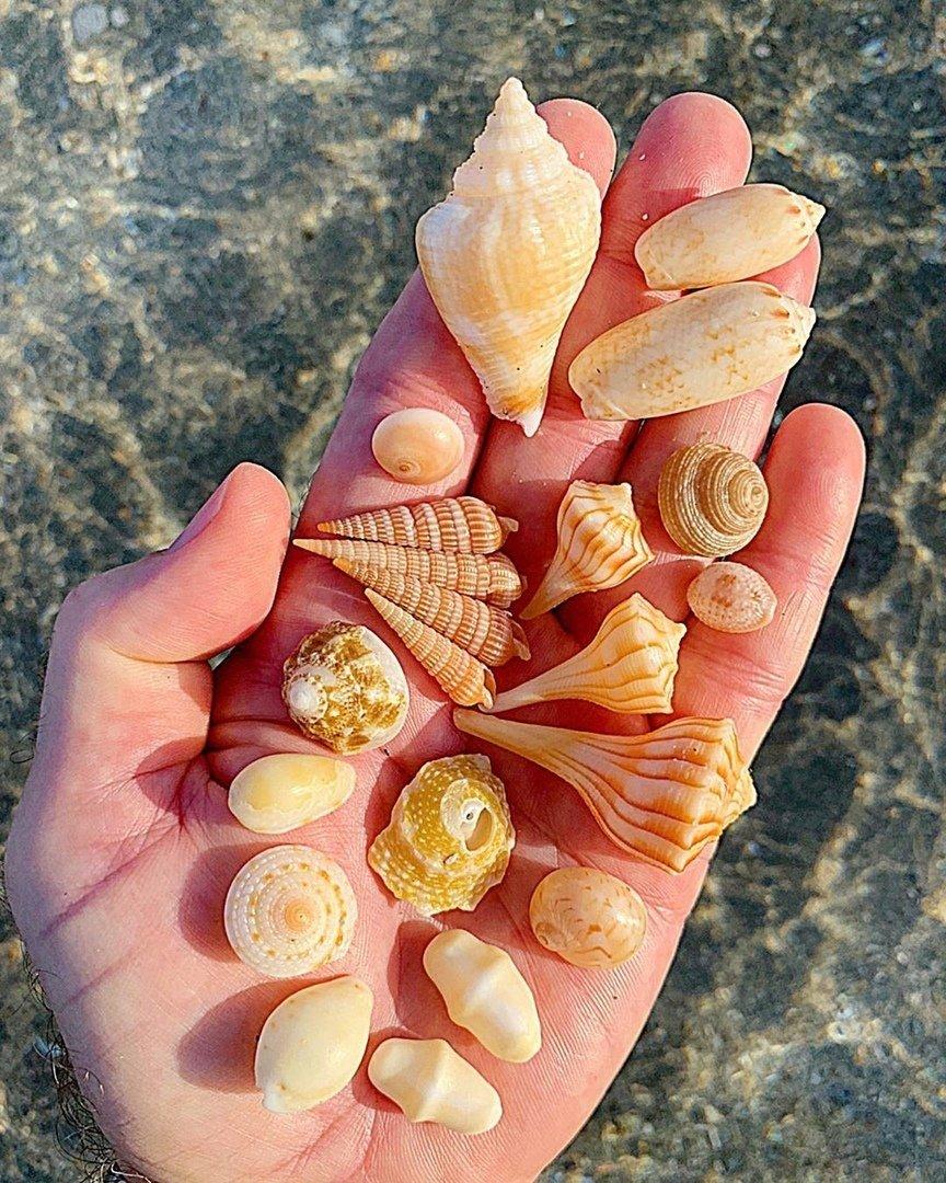 Сокровища морские 2