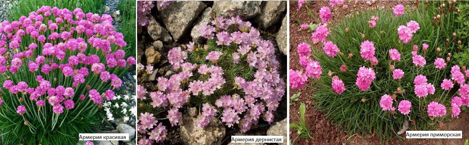 Название цветка. разновидности цветов. самые необычные цветы
