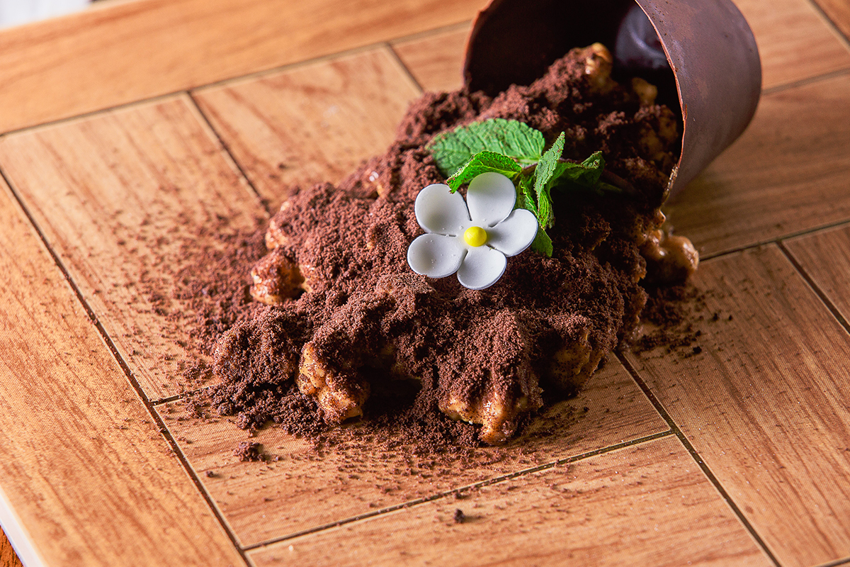 Я люблю гелиотроп - цветок, который пахнет ванилью: делюсь секретом выращивания