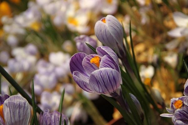 Происхождение праздника 8 марта. версии происхождения международного женского дня
