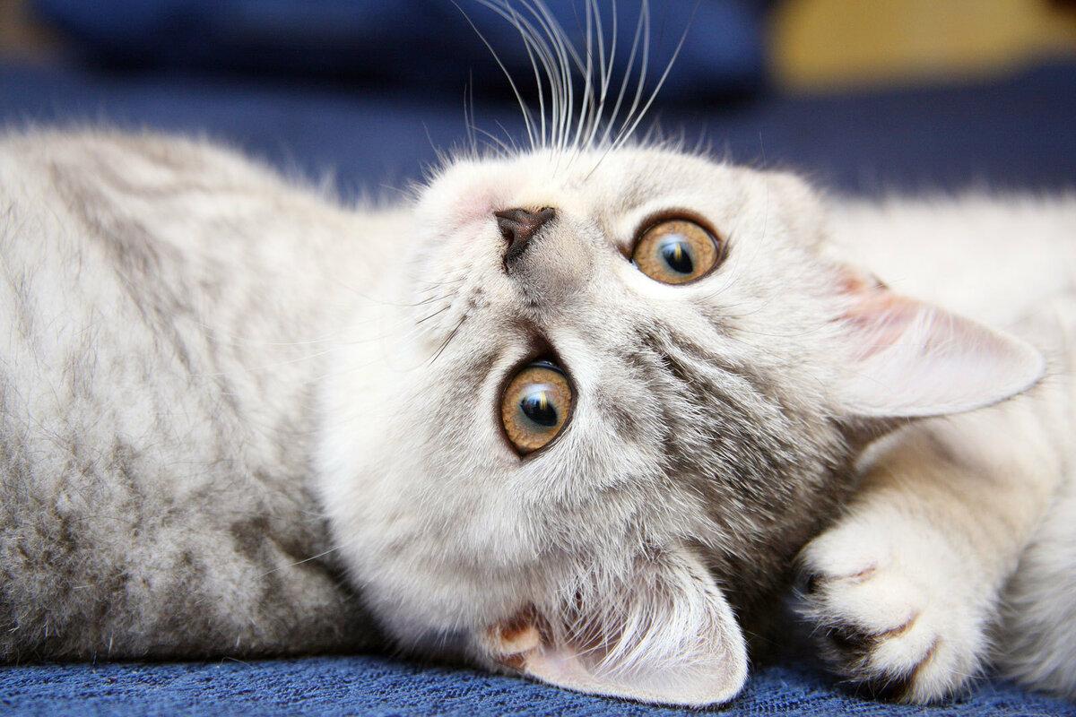 Игры кошки - играть онлайн бесплатно