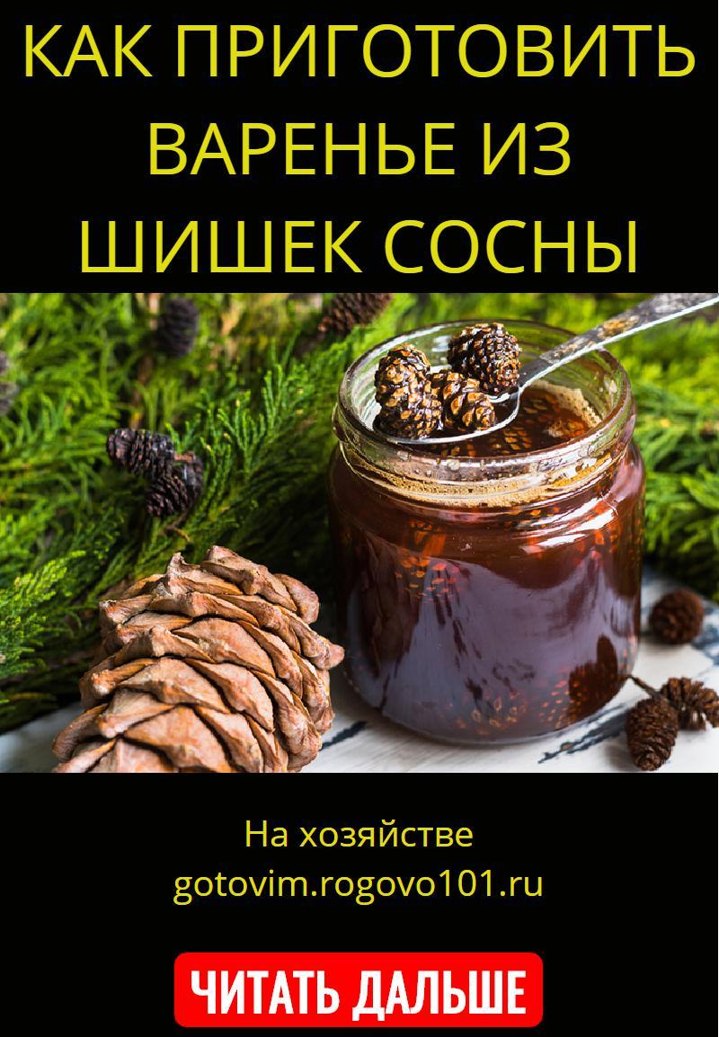 Варенье из сосновых шишек – сборник вкусных и полезных рецептов — самый смак
